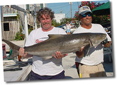 65 Pound Cobia Caught With Sundance Sportfishing